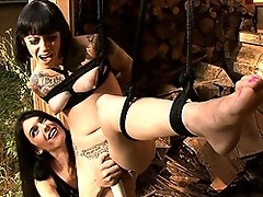 Tied up Sparky getting punished by sexy TS Mandy Mitchell